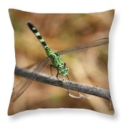 Green Dragonfly On Twig Throw Pillow