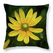 Green Eyed Daisy Throw Pillow
