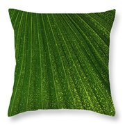 Green Fan - Radiating Lines And Scattered Polka-dots Throw Pillow
