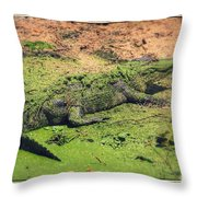 Green Gator With Border Throw Pillow