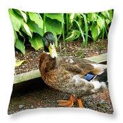 Green Head Mallard Duck 2 Throw Pillow