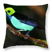 Green Headed Bird On Branch Throw Pillow