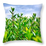 Green Hedge Throw Pillow