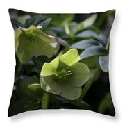 Green Hellebore Squared Throw Pillow