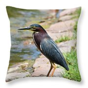 Green Heron-1 Throw Pillow