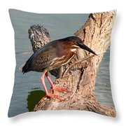 Green Heron 1 Throw Pillow