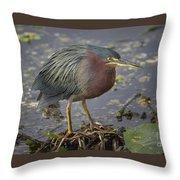 Green Heron 52 Throw Pillow