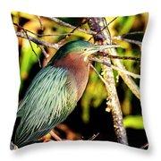 Green Heron At Green Cay Wetlands Throw Pillow
