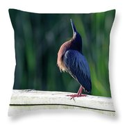 Green Heron Calling Softly In The Early Morning Throw Pillow