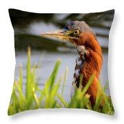 Green Heron Closeup  Throw Pillow