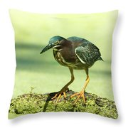 Green Heron In Green Algae Throw Pillow