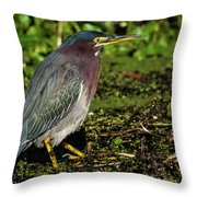 Green Heron In Swampy Water Throw Pillow
