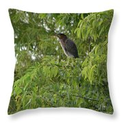 Green Heron In Tree Throw Pillow