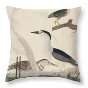 Green Heron, Night Heron, Young Heron, And Great White Heron Throw Pillow