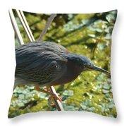 Green Heron On Stilts Throw Pillow
