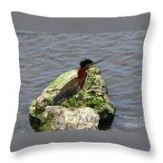 Green Heron Ruffled Feathers Throw Pillow