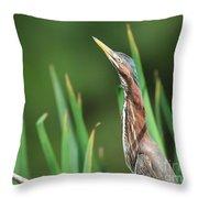 Green Heron Watches Throw Pillow