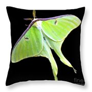 Green Lantern Moth Throw Pillow