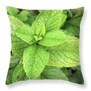 Green Mint Leaves Throw Pillow