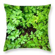 Green Parsley 2 Throw Pillow