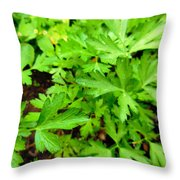 Green Parsley  4 Throw Pillow