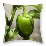 Green Pepper Throw Pillow