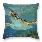 Green Sea Turtle Chelonia Mydas Throw Pillow