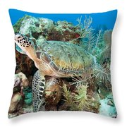 Green Sea Turtle On Caribbean Reef Throw Pillow