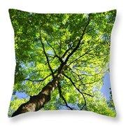Summer Tree Canopy Throw Pillow