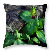 Green Trillium At Sunrise Throw Pillow