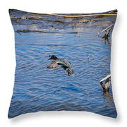 Green-winged Teal 4 Throw Pillow