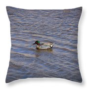 Green-winged Teal 5 Throw Pillow