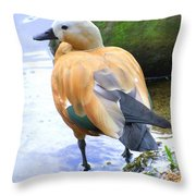 Green Winged Wood Duck 1 Throw Pillow