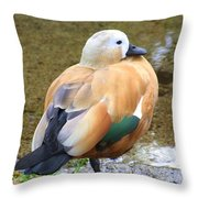 Green Winged Wood Duck 2 Throw Pillow