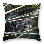 Greeting Card - Joe Joe In The Grass Throw Pillow