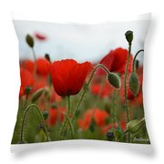 Greeting Card - Poppies In France Throw Pillow