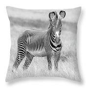 Grevy Zebra  5953bw Throw Pillow