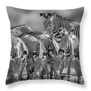 Grevy Zebra Party  7528bw Throw Pillow