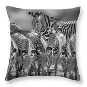 Grevy Zebra Party  7528bwc Throw Pillow