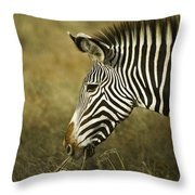 Grevy's Zebra Throw Pillow