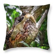 Grey Bellied Squirrel Throw Pillow