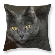 Grey Cat With Yellow Eyes Throw Pillow