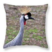 Grey Crowned Crain Of Africa 3 Throw Pillow