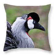Grey Crowned Crain Of Africa 4 Throw Pillow