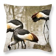 Grey Crowned Crain Of Africa 5 Throw Pillow