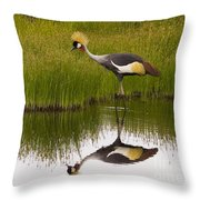 Grey Crowned Crane - Signed Throw Pillow