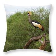 Grey Crowned Crane Throw Pillow by Yair Karelic