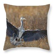 Grey Heron Landing Throw Pillow