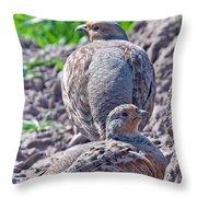 Grey Partridge Throw Pillow