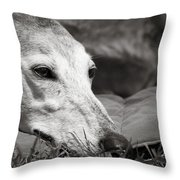 Greyful Throw Pillow